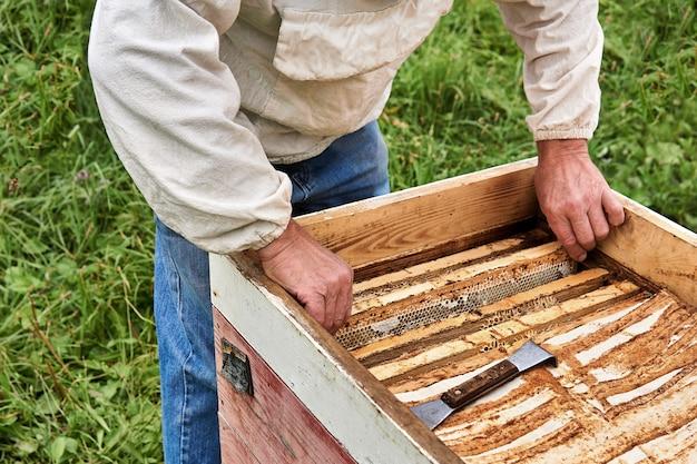 Apicultor remove a estrutura de favo de mel da colmeia aberta