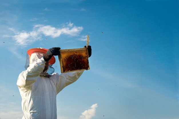 Apicultor segurando um favo de mel cheio de abelhas.