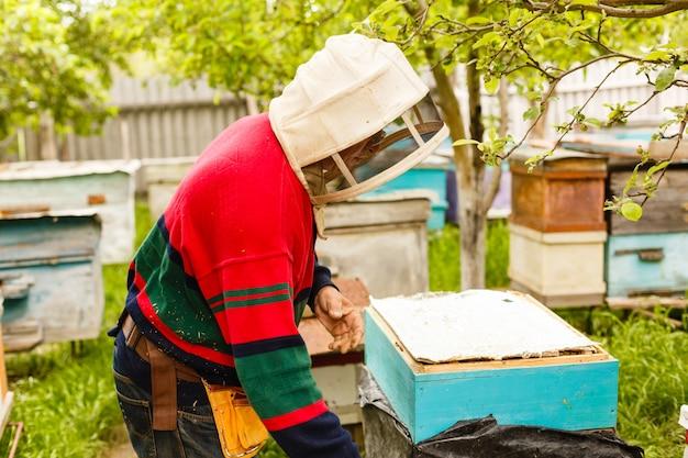 Apicultor segurando um quadro de favo de mel