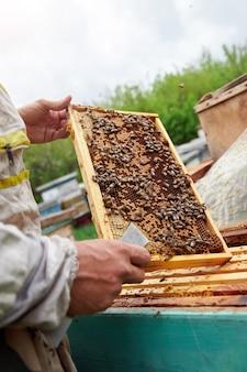 Apicultor segurando uma moldura com favos de mel e abelhas