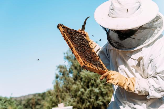 Apicultor trabalhando coleta mel. conceito de apicultura.