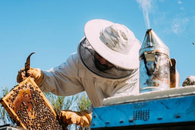 Apicultor trabalhando na coleta de mel