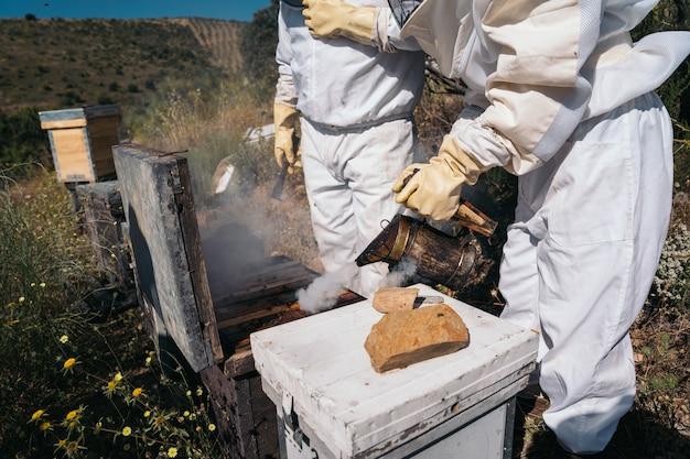 Apicultores trabalhando para coletar mel
