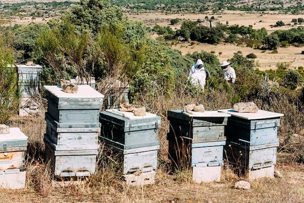 Apicultores trabalhando recolhem mel. conceito de apicultura.