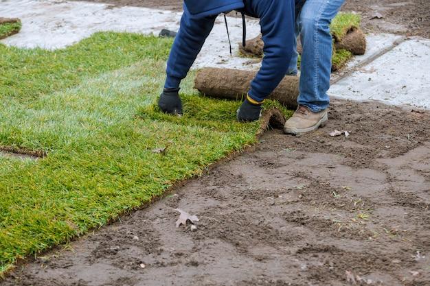 Aplicação de grama verde enrolada com grama para o novo gramado