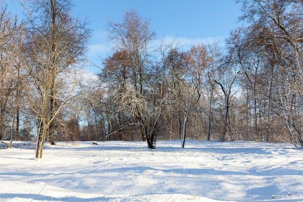 Após a queda de neve, a neve cobriu árvores altas e baixas e arbustos no inverno, a paisagem
