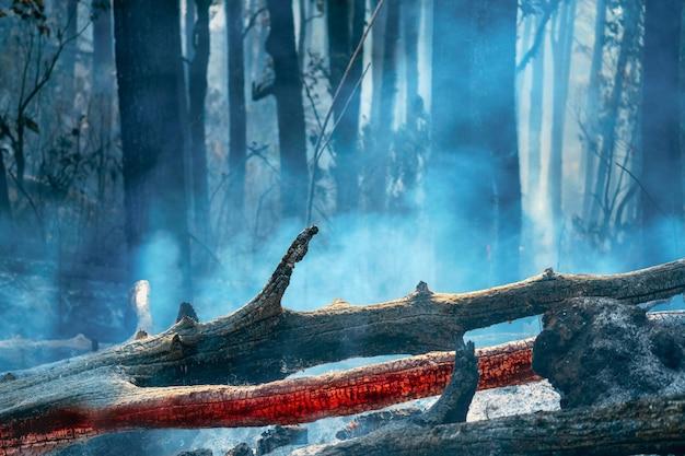 Após o desastre de incêndio na floresta tropical está queimando causado por humanos