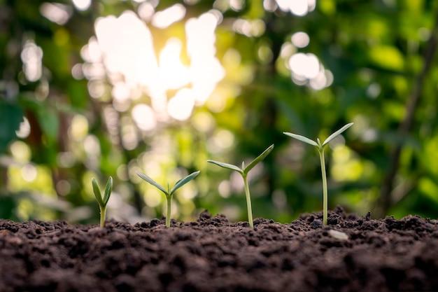 Apresentação sobre a sequência de germinação da planta e o conceito de crescimento da planta em ambiente externo