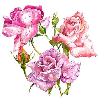 Aquarela buquê de flores rosas