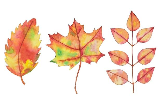 Aquarela cair, folhas de outono amarelo, laranja, elementos de design da mão desenhada.