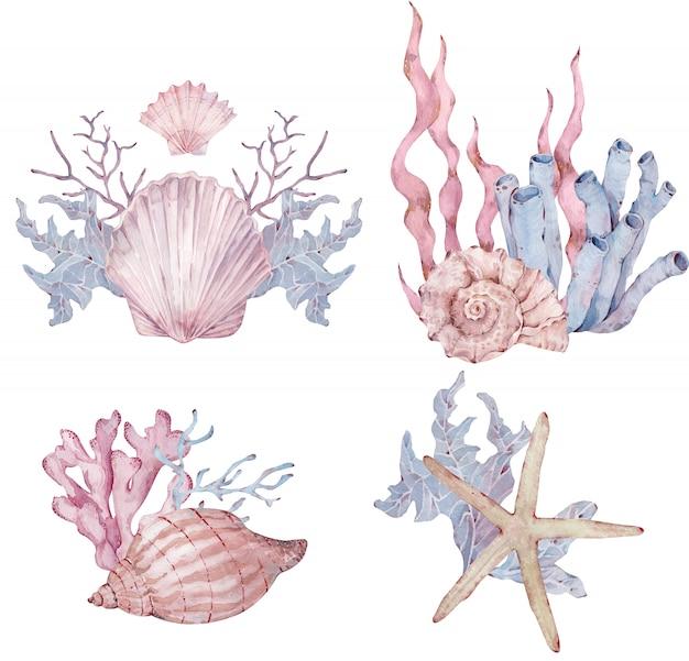 Aquarela conjunto de arranjos de vida marinha com conchas, algas, estrelas do mar.