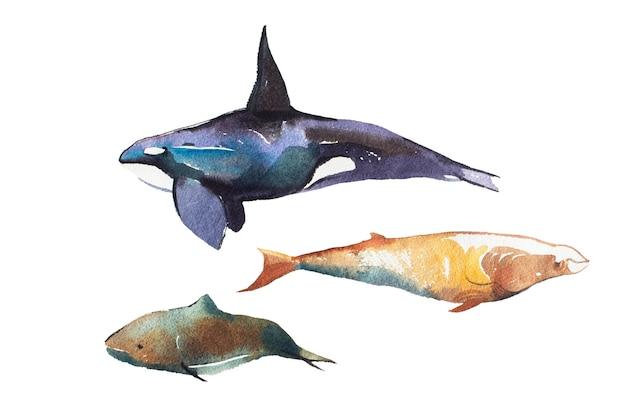 Aquarela de baleias ilustração de mão desenhada em branco.