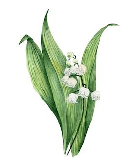 Aquarela de flores de lírio do vale pintada em branco