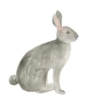 Aquarela de lebre cinza isolada no fundo branco. coelho.