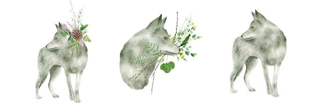 Aquarela de lobo cinzento isolada no branco.