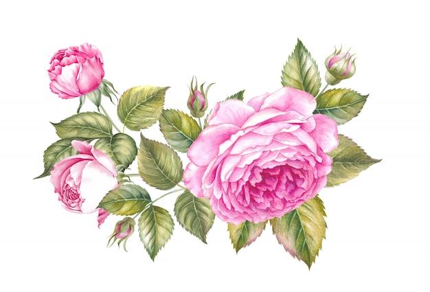 Aquarela flor desabrochando. bonitos rosas cor de rosa em estilo vintage para o projeto. composição artesanal guirlanda. ilustração botânica em aquarela.