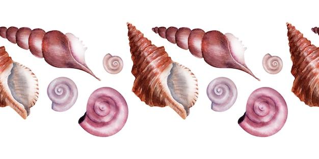 Aquarela fronteira conchas do mar. conchas de madrepérola rosa.