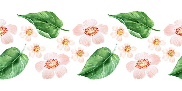 Aquarela fronteira sem costura com flores, frutos maduros, galhos e folhas de uma árvore de kiwi
