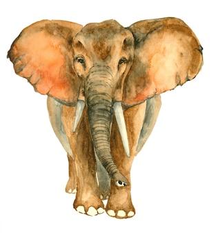 Aquarela mão desenhada elefante