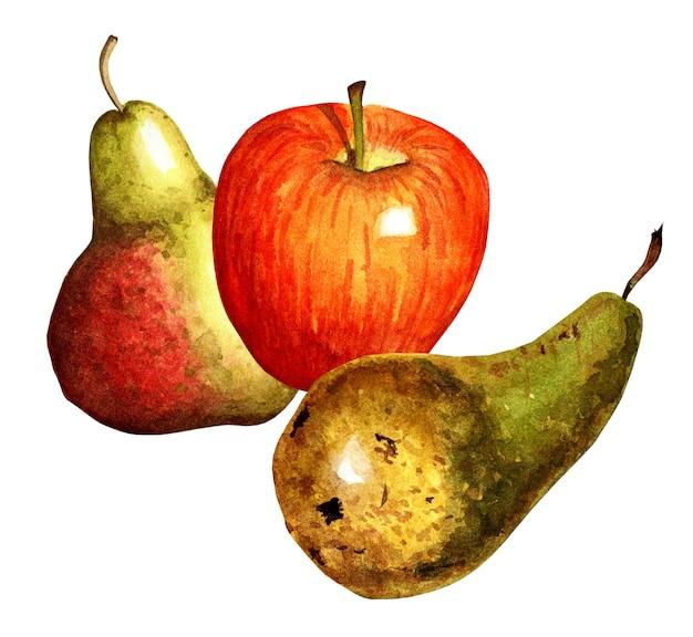Aquarela natureza morta duas peras e uma maçã peras verdes amarelas maçã vermelha isolada no branco