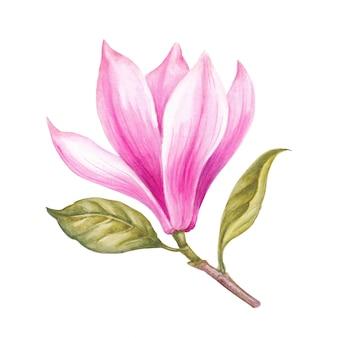 Aquarela rosa magnólia.
