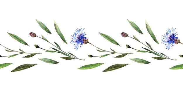 Aquarela sem costura fronteira com galhos, folhas, botões e flores da planta centáurea