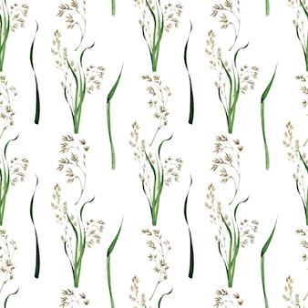 Aquarela sem costura padrão com a imagem da planta do prado bluegrass