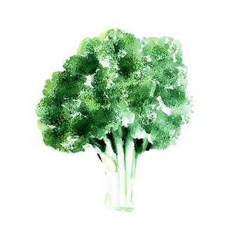 Aquarela sem costura padrão com diferentes tipos de repolho. brócolis
