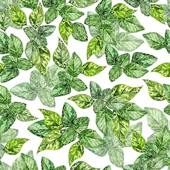 Aquarela sem costura padrão com folhas verdes de hortelã em fundo branco