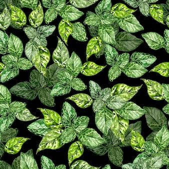 Aquarela sem costura padrão com folhas verdes de hortelã em fundo preto