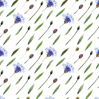 Aquarela sem costura padrão com galhos, folhas, botões e flores da planta centáurea