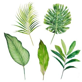 Aquarela tropical deixa o conjunto de clipart. ilustração de vegetação exótica.