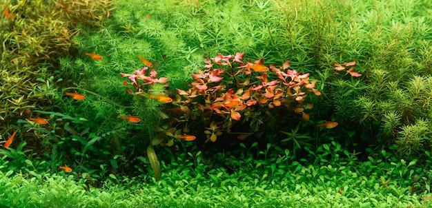 Aquário bonito verde com peixes