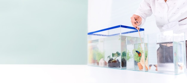 Aquário para animal de estimação e passatempo em casa. pegar peixes para uma nova tigela.