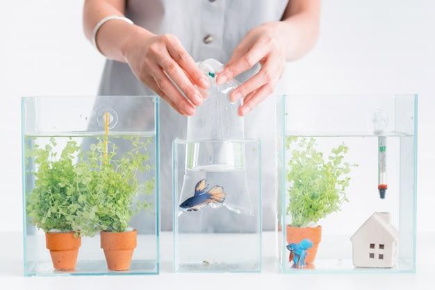 Aquário para animal de estimação e passatempo em casa. segurando um saco plástico com peixes novos.