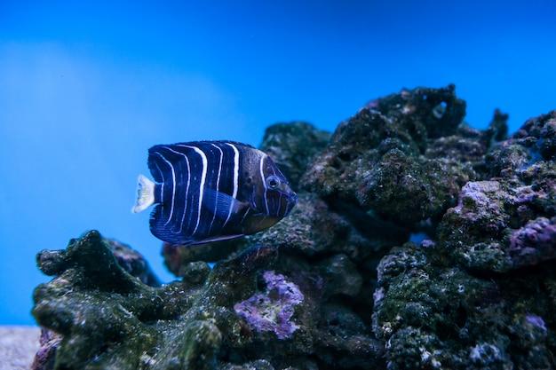 Aquário, peixe, recife, mar, coral