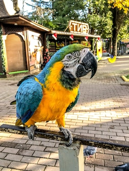 Ara ararauna. retrato de papagaio de arara azul-amarela. papagaio de arara ara.