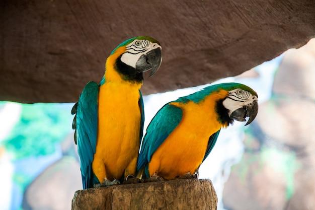 Ara papagaio escovando a cauda do bico sentado em um galho, a árvore