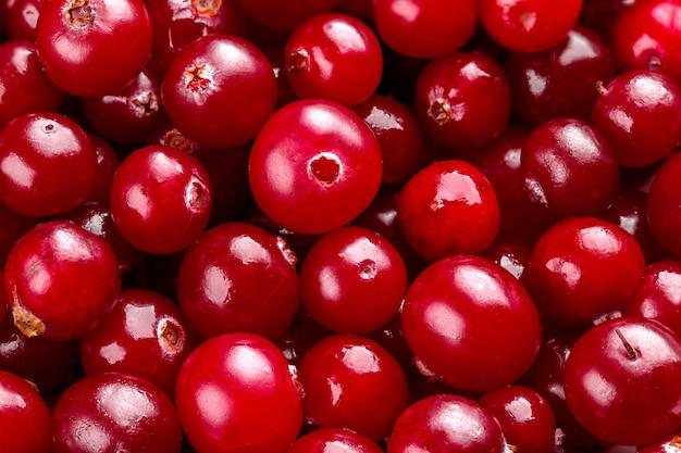 Arandos frescos suculentos. cranberries vermelhas
