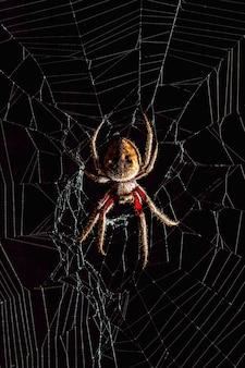Aranha assustadora de orb-weaver dourada no meio da teia de aranha em fundo preto.