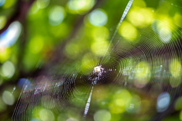 Aranha em sua teia contra um fundo desfocado.