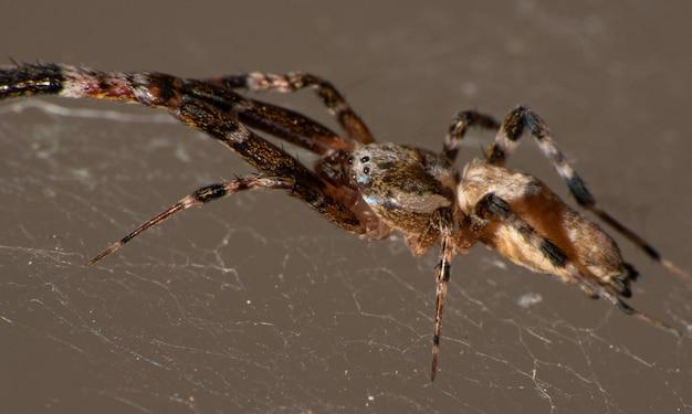 Aranha em sua teia, macro fotografia, fundo escuro, foco seletivo.