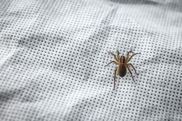 Aranha em tecido branco