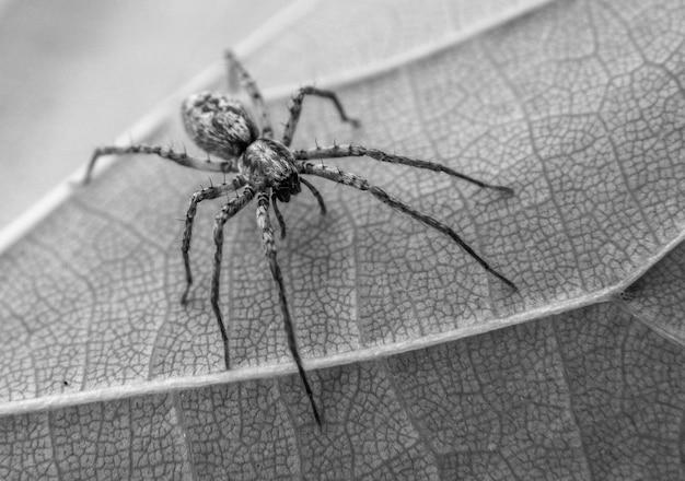 Aranha em uma folha