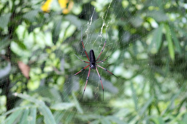 Aranha em uma teia de aranha com um fundo de natureza.
