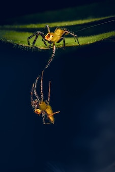 Aranha está na folha. ajudar os amigos a cair das folhas