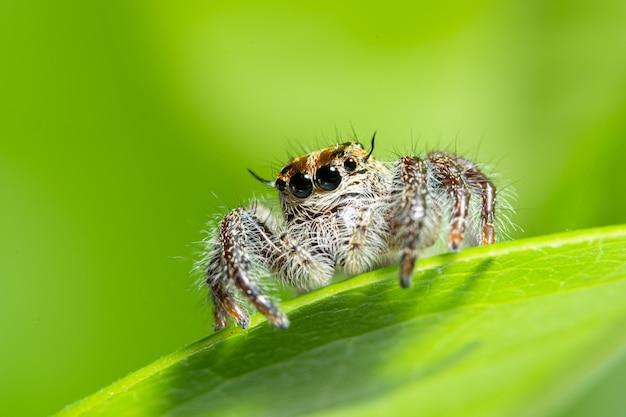 Aranha macro em fundo verde natureza