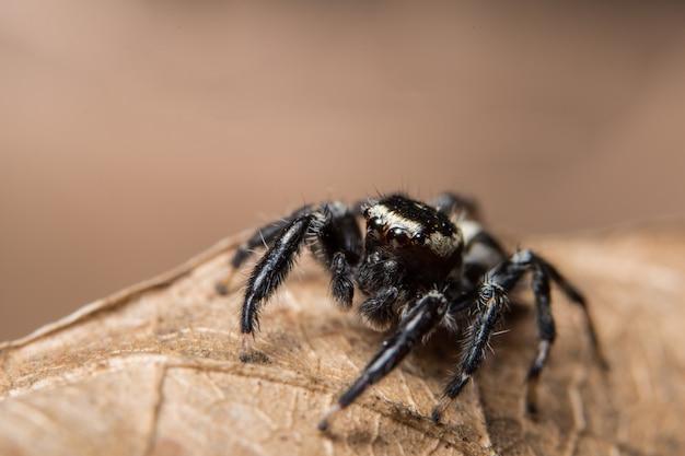 Aranha macro na folha seca