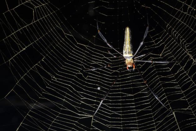 Aranha macro na teia de aranha