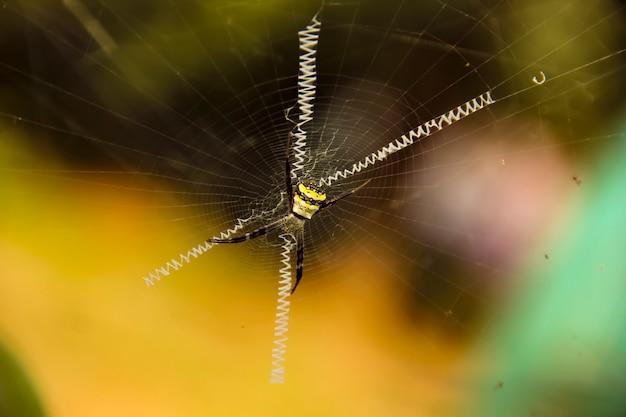 Aranha marrom com foco no meio